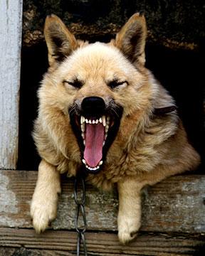 Houston Animal Control Dog Bite